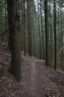 Palatinate Forest Stock 33 by Malleni-Stock