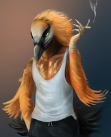 Bearded Vulture by apricotjackal