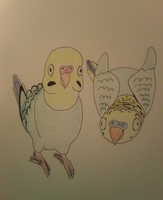 Budgies (Quick Drawing) by MagsGallery