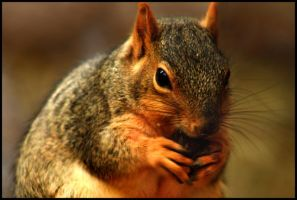 His Nuts by FramedByNature