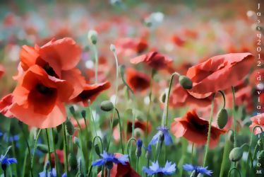 Poppies - Wallpaper by JassysART
