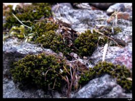 moss by tiefel