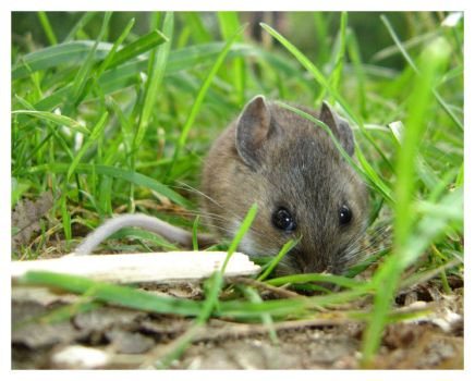 Little Mouse by VileDemoness
