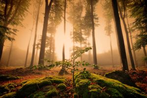 Forest enlightenment by tomsumartin