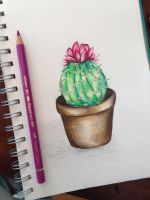 Little Cactus by Liss-Lily