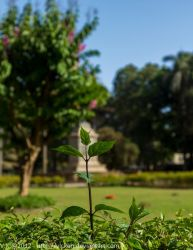 Let me grow by vicken