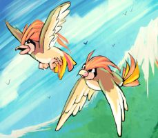 Pidgeotto by Foltzy