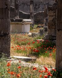 Poppies and Roman ruins by LordLJCornellPhotos