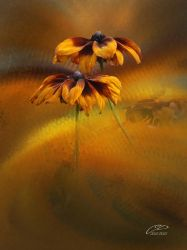 RUDBECKIA. by BELLESYMPHORINE