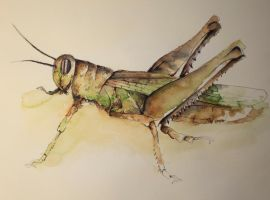 Grasshopper by fittak