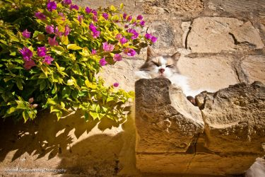 Gozo 2 - Lazy kitty by drudegio