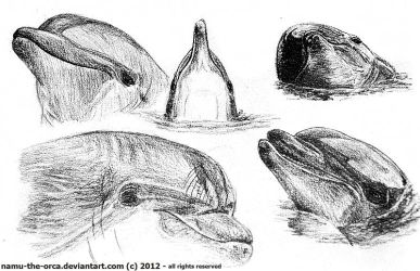 Bottlenose dolphin practice by namu-the-orca