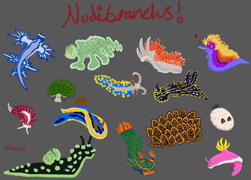 Nudibranch Collection by EmuCat