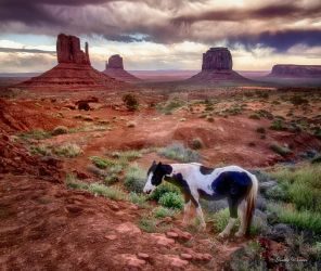 Horse in Monument Valley by KathyWeaverPhotogirl