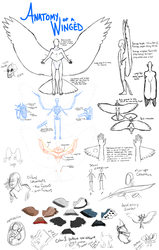 Anatomy of a Winged v2.0 by zynwolf