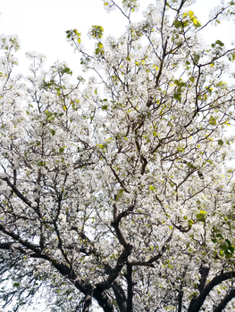 Transparent Tree_3_HDR by nealbing