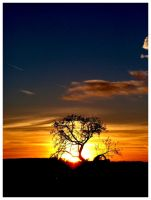Burning Tree by JeanFrancois