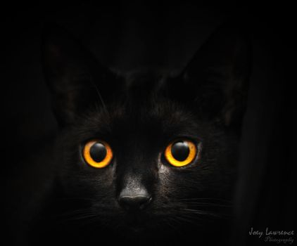 Cat eyes by cyricjumala