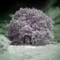 The Lilac Tree by DavidCraigEllis