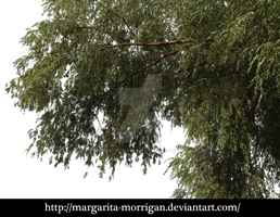 willow branches_01 by margarita-morrigan