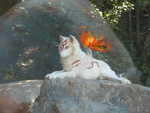 Real Okami by UKthewhitewolf