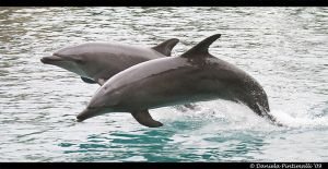 Dolphins by TVD-Photography