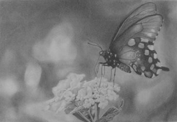 Butterfly drawing by undercoversketch
