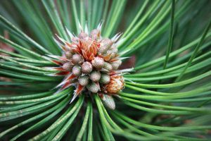 Spines of Evergreen by Perfectwonders