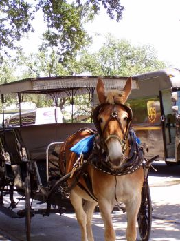 Mule and Buggy by zillah73