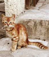 Cat by Chater