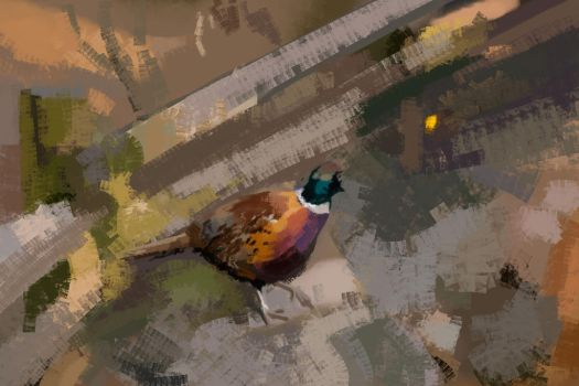 ASOT505: Ring-Necked Pheasant by Hamsta180