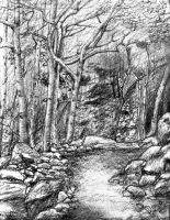 Trail Through Trees by Nealism