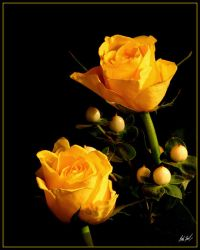 Yellow Roses by SteelCowboy