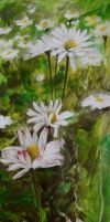 More Daisies by maxine