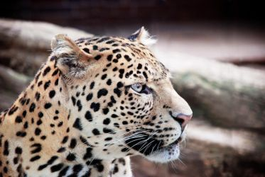 Spotted beauty by Nikki-vdp
