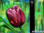 Tulip love by Addicted2disaster