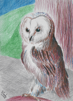 Barn owl colour pencil by SulaimanDoodle