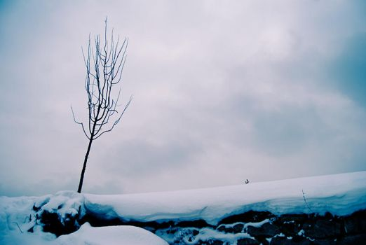 Cold lonely winter by StefanyKK