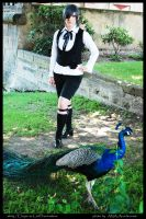 Peacock by Efryee