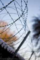 Barbed wire by DaaMaaN