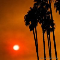 Palm Tree Sunset in Ashes by Mayzart