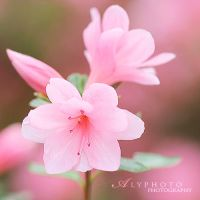 Springs Coming VIII by Alyphoto