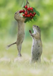 Cherry Lovers by JulianRad