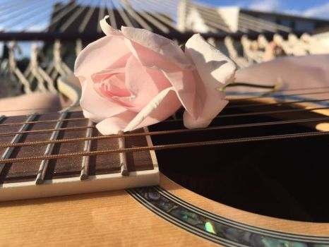 Just a Pink Rose on a Dean Guitar by emi1296