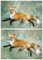 Kick Back and Relax by WeirdCityTaxidermy