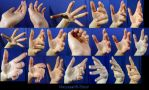 Hand Pose-Foreshortening/Perspective 2 by Melyssah6-Stock