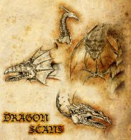 Dragon Scans by Geekincognito
