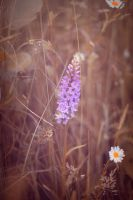 Common Orchid by WorldII