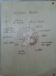Wooden copybook rear - Human Brain pyrography by CPSCorporation
