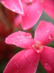 Pearls After the Rain by Clair3Su3